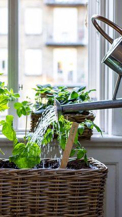 I både krukker og altankasser kan man med fordel blande forskellige planter. Foto: PR.