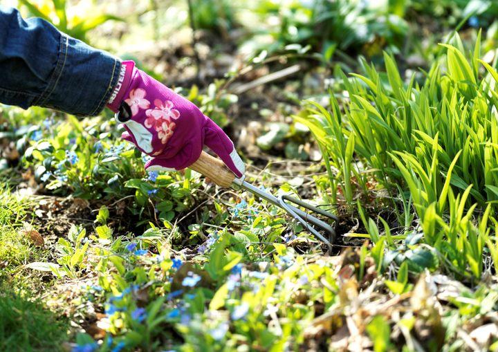 Ukrudtet stortrives i det ustadige danske vejr, og ifølge forsker kan det være skadeligt for græsplænen. Foto: PR.